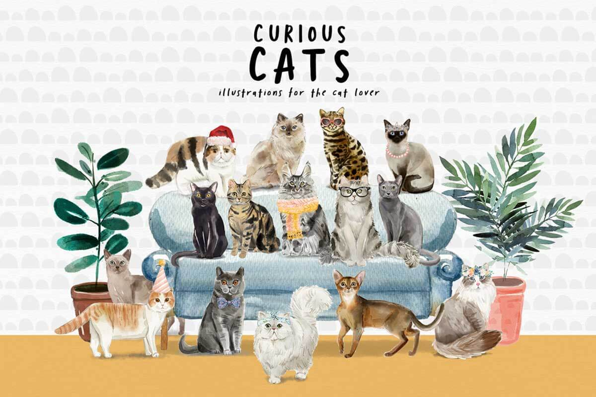 CURIOUS CATS – CAT ILLUSTRATIONS