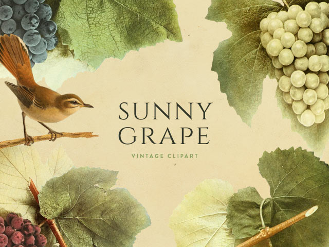 Sunny Grape Vintage Clipart