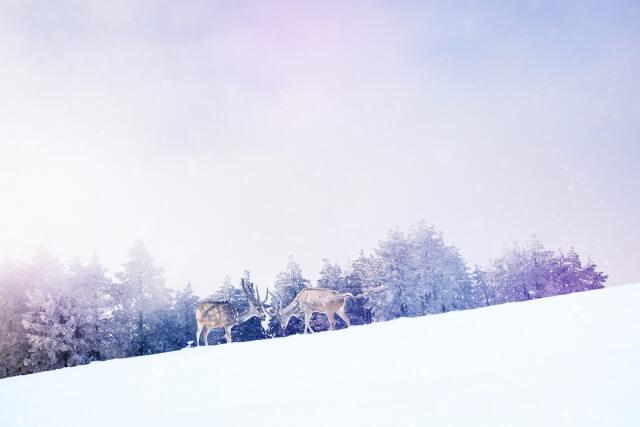 クリスマスの雪原と鹿