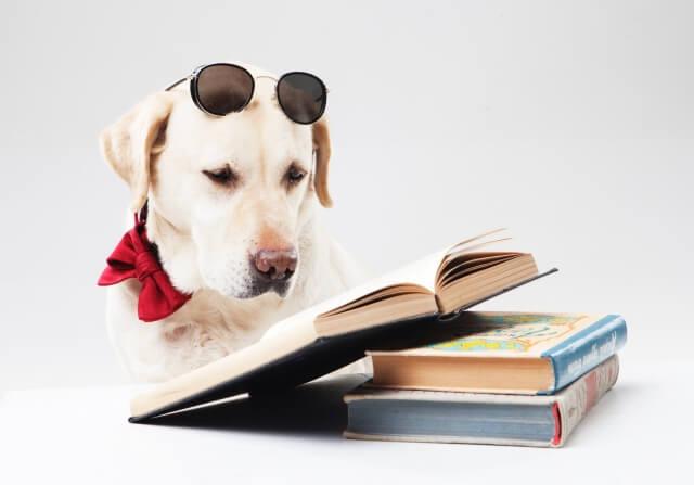 読書するラブラドールレトリバー