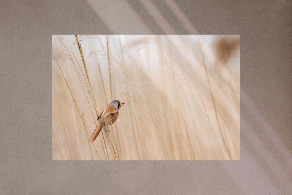 ○:背景がシンプルな同一色なら、繊細な影でもわかりやすい