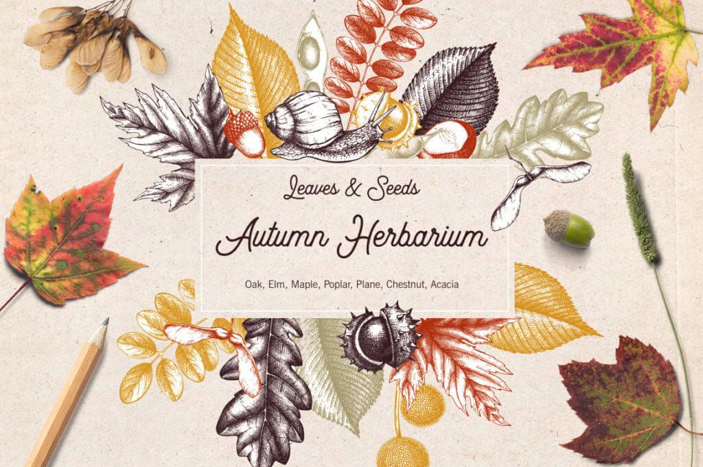 Vintage Autumn Leaves Set