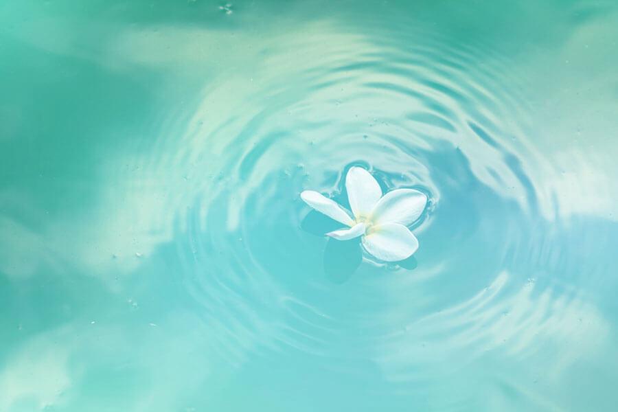 水面に浮かぶ花びら