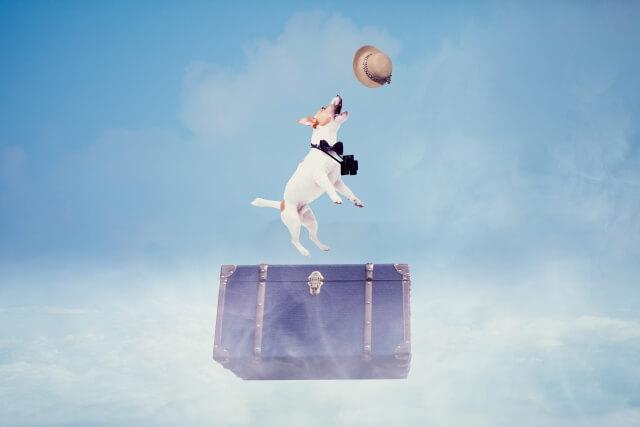 麦わら帽子で旅する犬