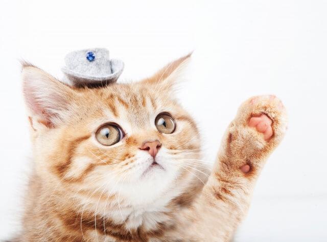手を挙げるネコ