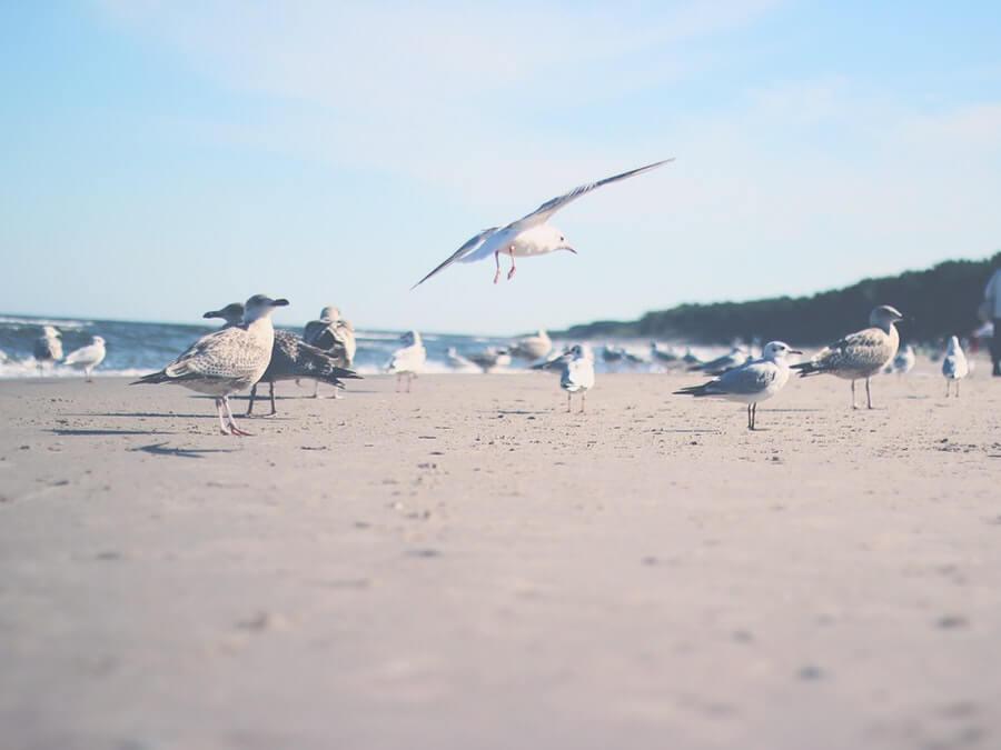 海外の鳥たち